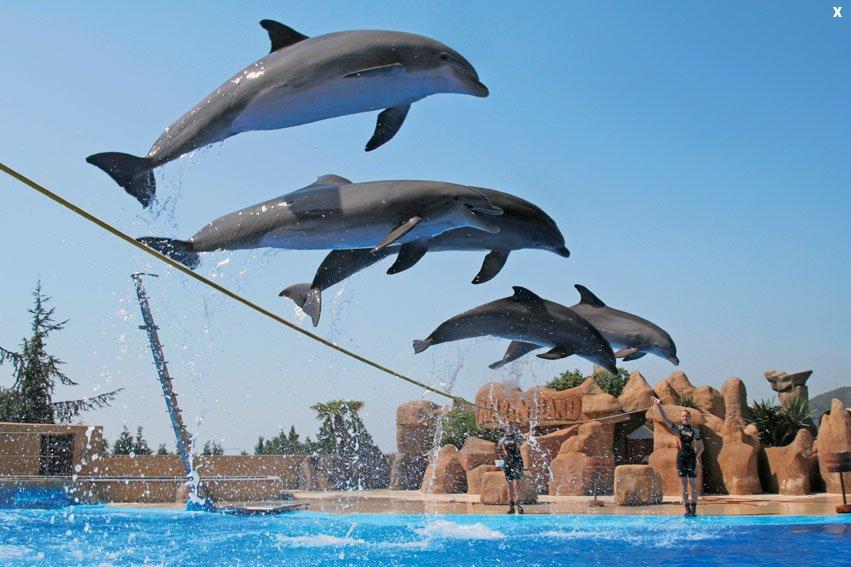 delfines004